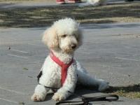 Therapiehunde 1