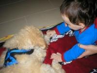 Therapiehunde 7